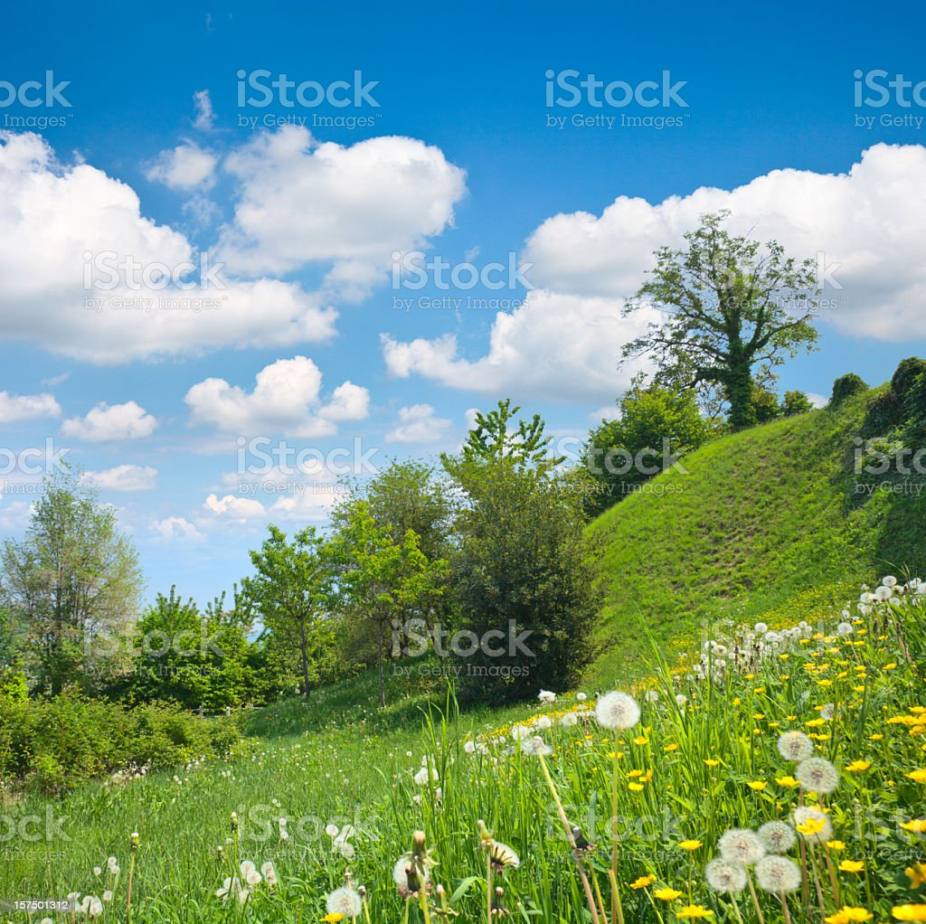 Hilly meadow royalty-free stock photo