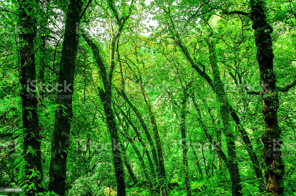 Himalaya green forest in the valley of flowers, uttarakhand in stock photo