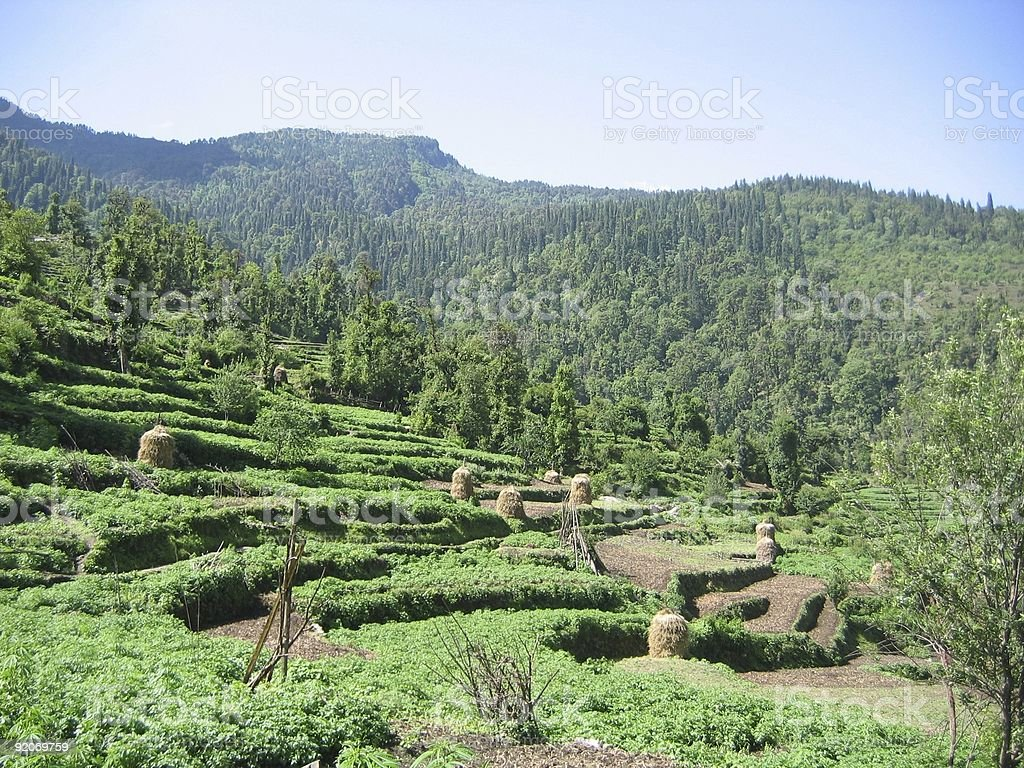 Himalaya Padi fields royalty-free stock photo