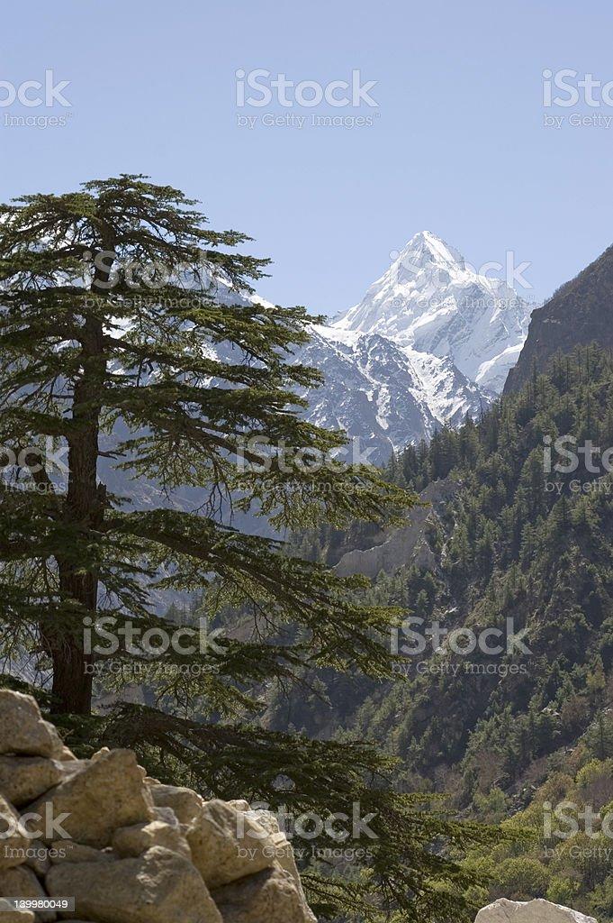 Himalayan fir and mountain stock photo