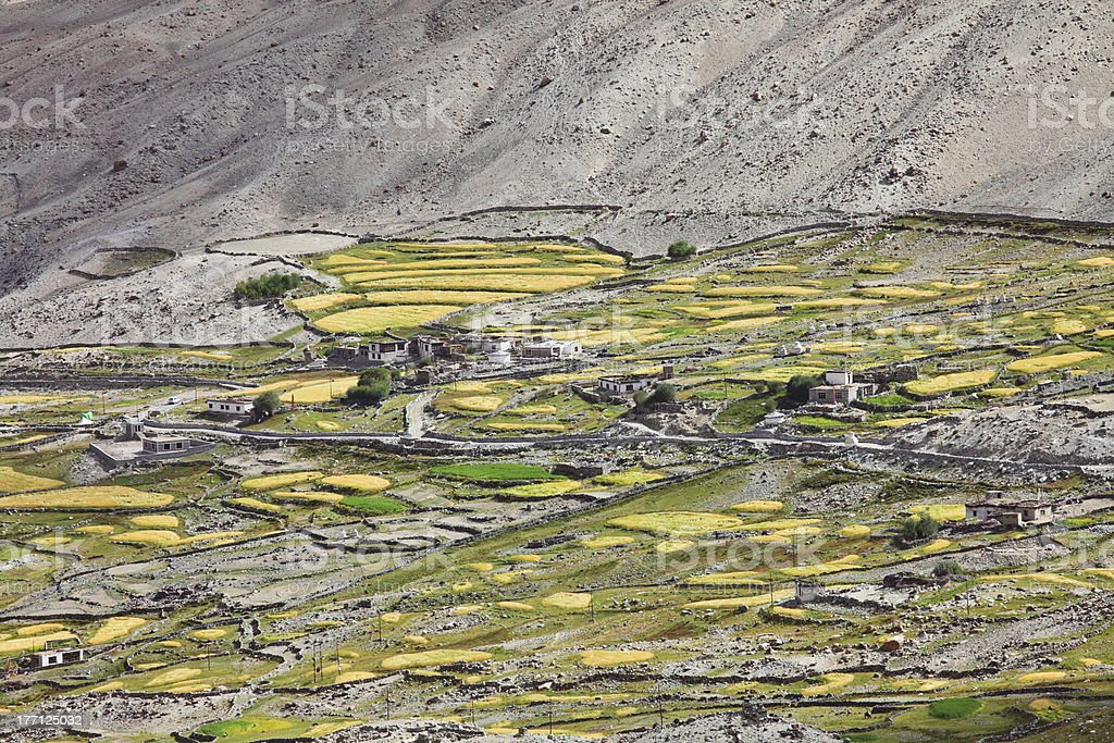 Himalayan oasis royalty-free stock photo