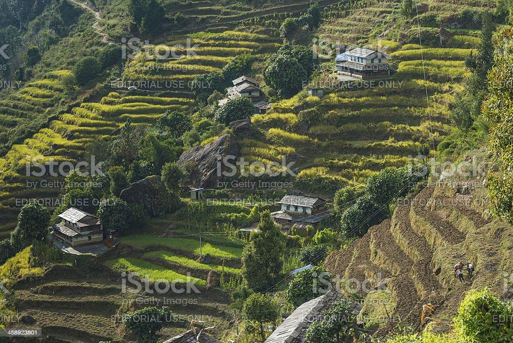 Himalayas Annapurna Sanctuary farm terraces Nepal stock photo