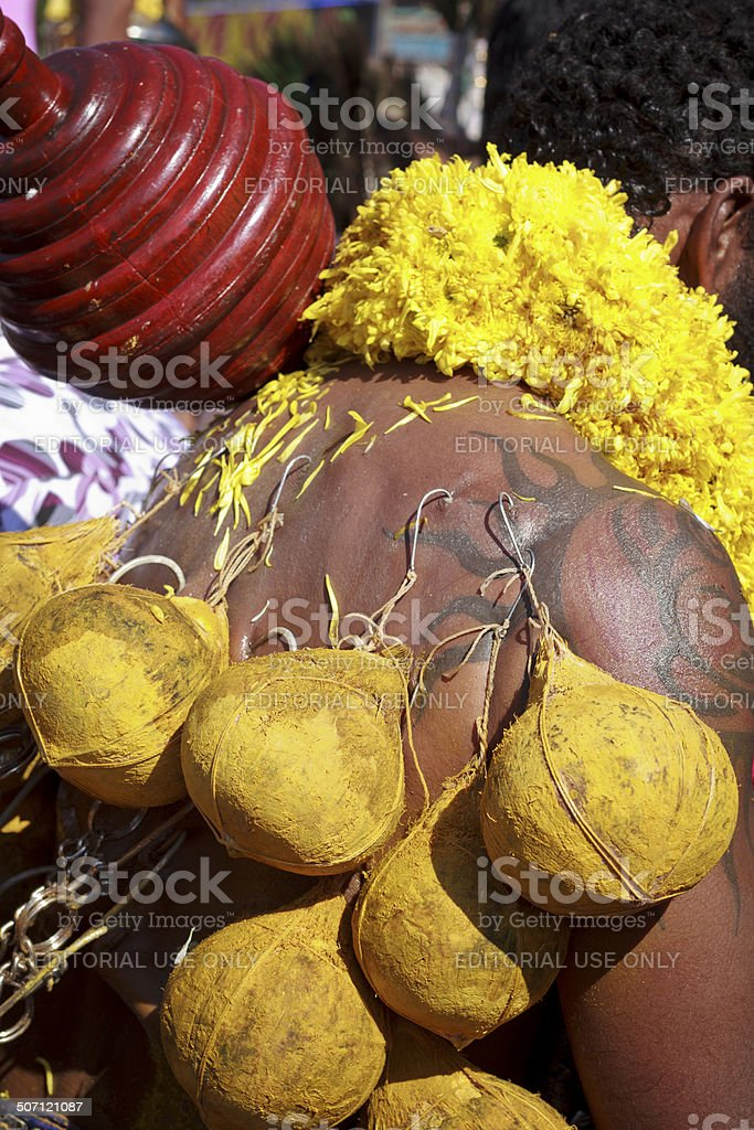 Hindu devotee with piercing of coconuts royalty-free stock photo