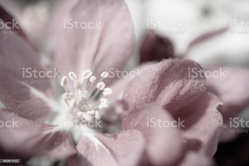 Hint of Pink stock photo