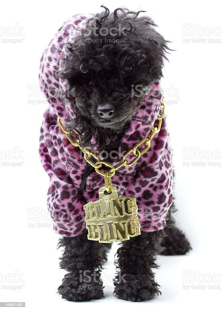 Hip Hop Dog royalty-free stock photo