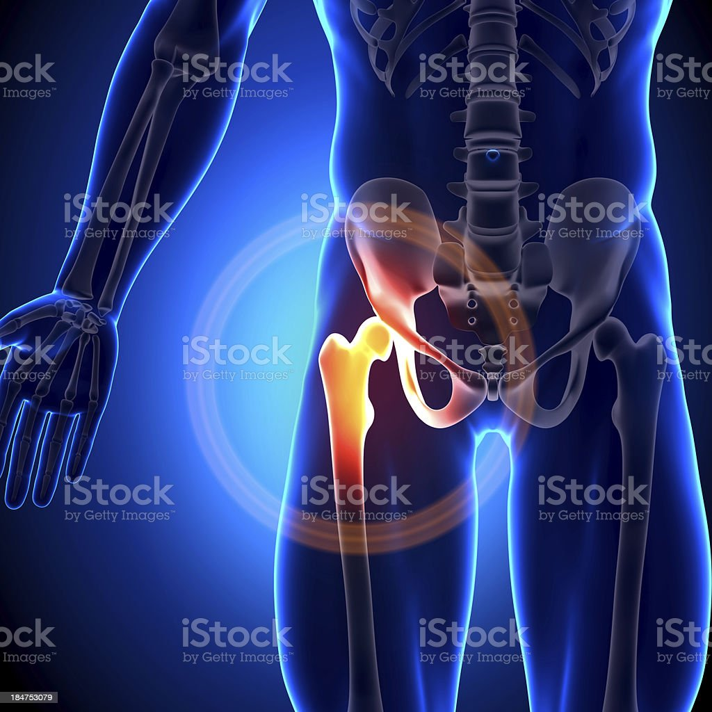 Hip Joint - Anatomy Bones royalty-free stock photo