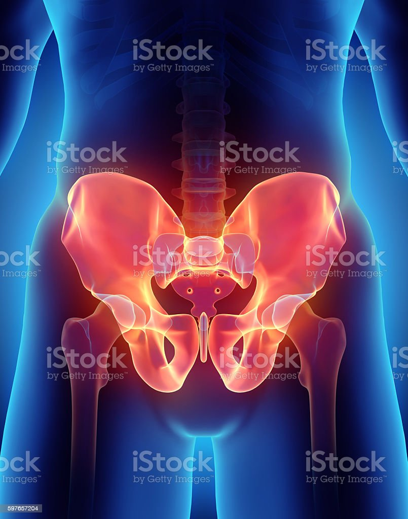 Hip Skeleton on blue background. stock photo