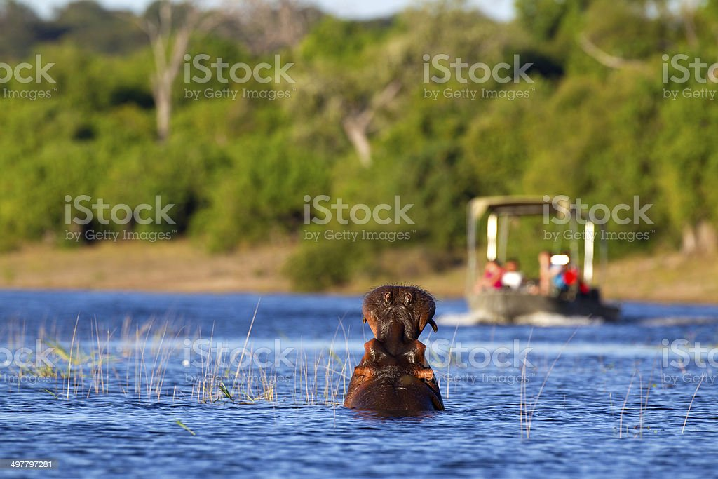 Hippo Warning stock photo
