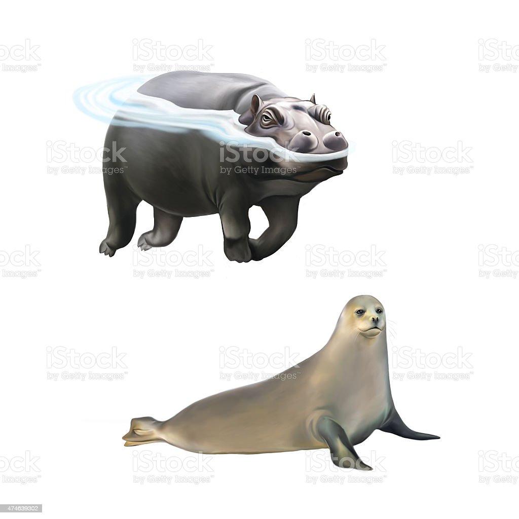 Hippopotamus swimming in the water, harp seal stock photo