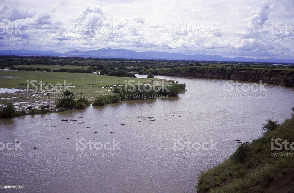 Hippos Virunga National Park Democratic Republic of Congo Africa stock photo