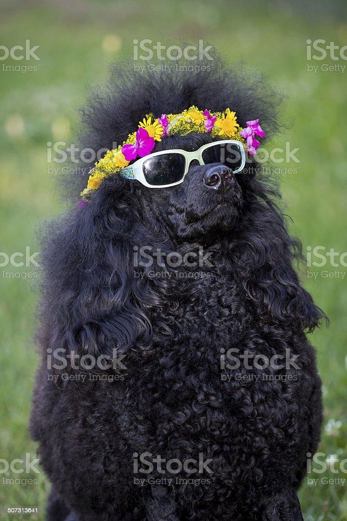 Hippy Zara royalty-free stock photo