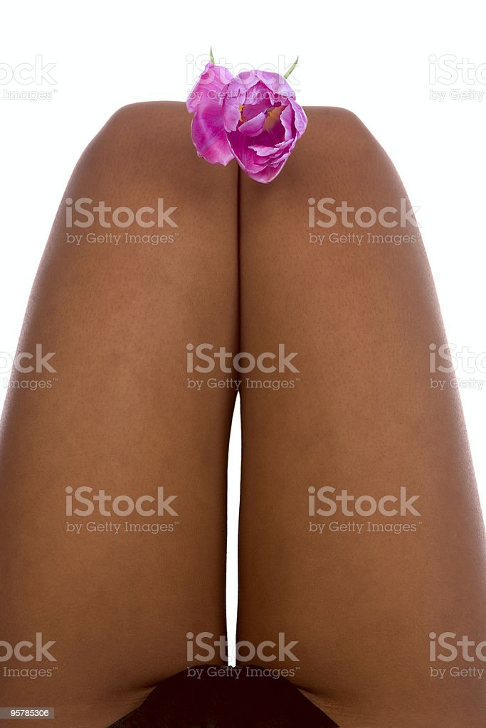 Hips with tulip royalty-free stock photo