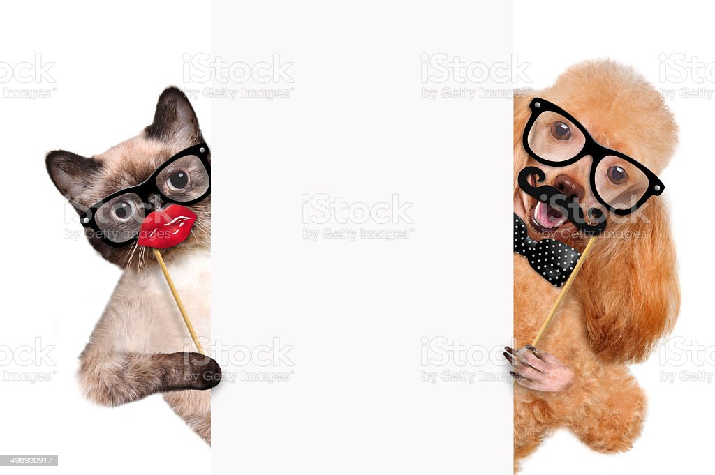 Hipster dog and cat. stock photo