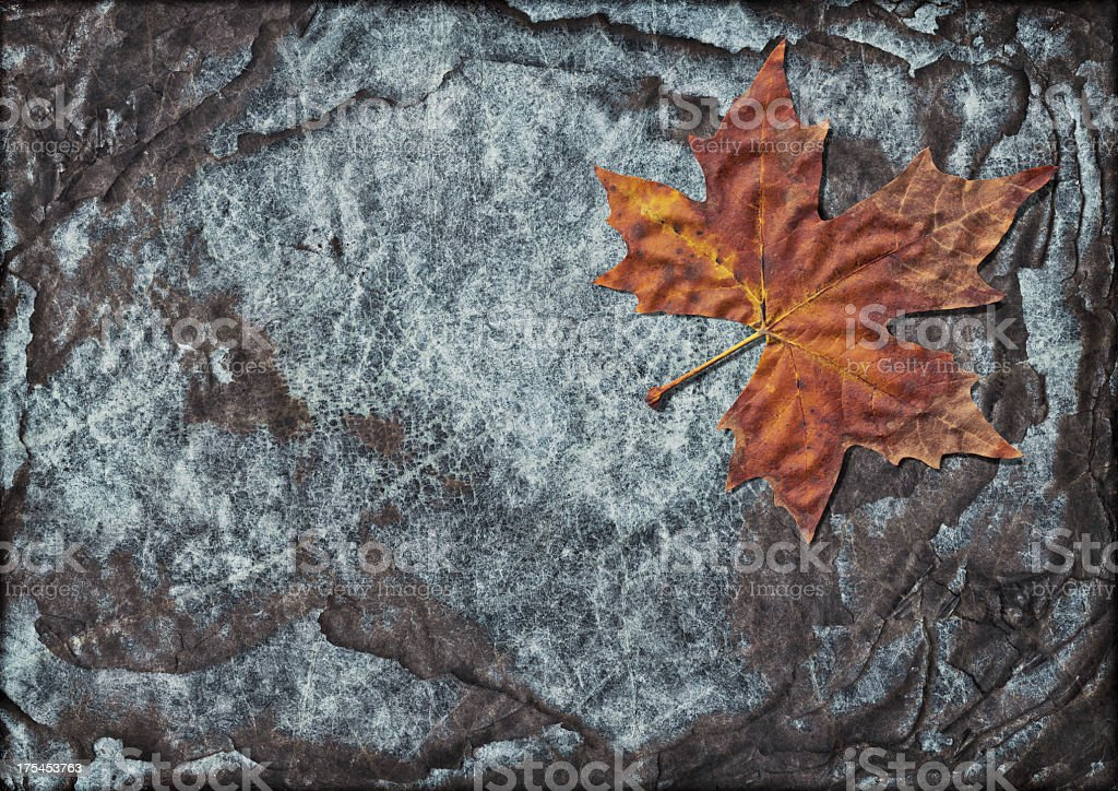 Hi-Res Autumn Dry Maple Leaf on Burnt Paper Sheets Stack royalty-free stock photo