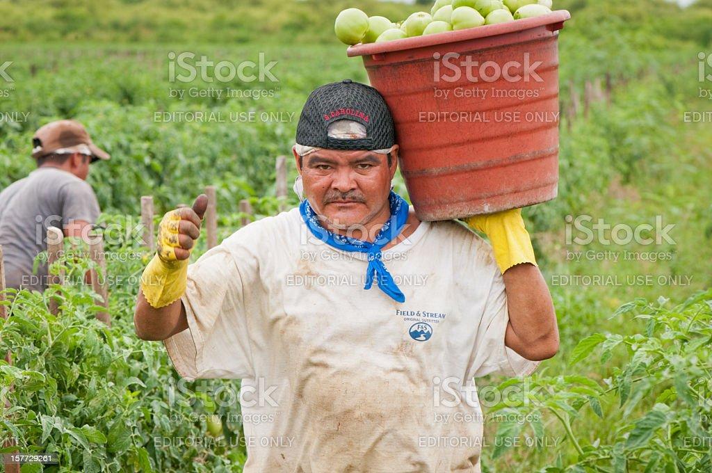 Hispanic Immigrant in US Harvest stock photo