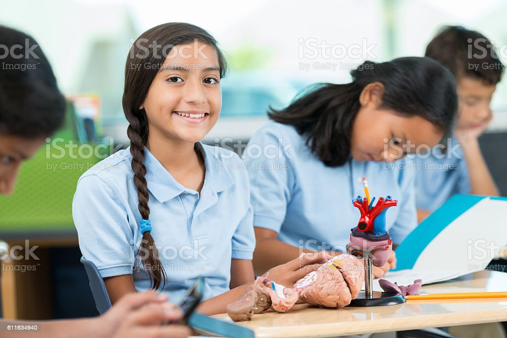 Hispanic schoolgirl studying human heart and brain in science class stock photo
