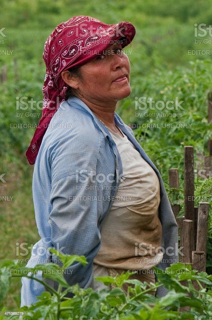 Hispanic Woman in US Harvest stock photo