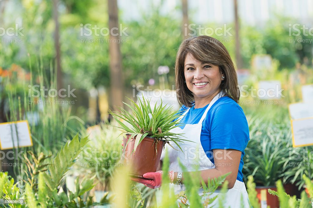 Hispanic woman working in garden center stock photo