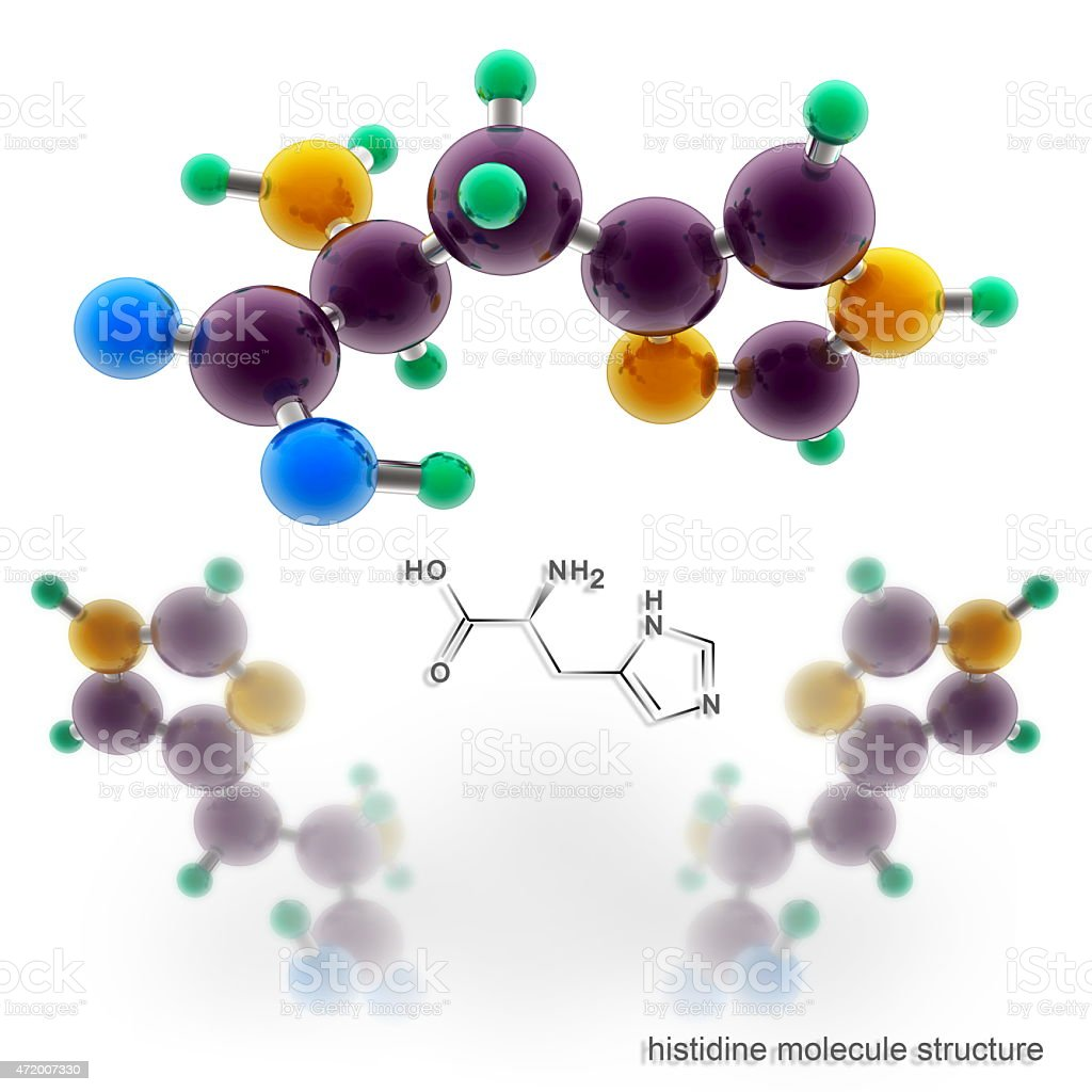 Histidine molecule structure vector art illustration