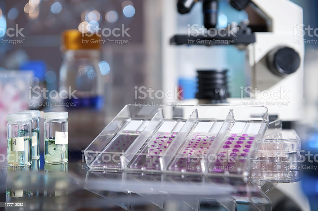 Histological experiment stock photo