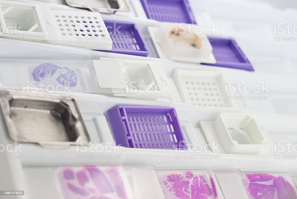histology stock photo