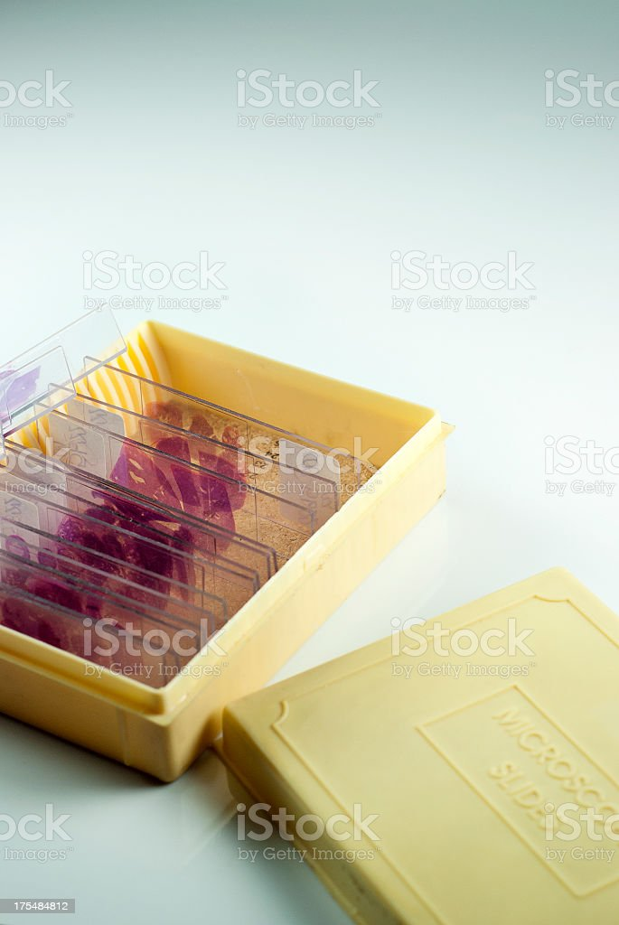 Histology slides in container royalty-free stock photo