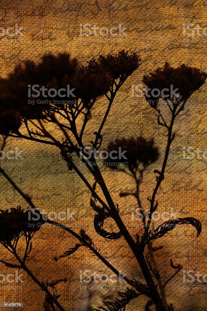 historic nature royalty-free stock photo