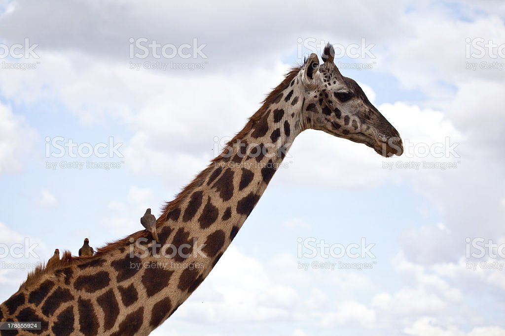 Hitching a Rde stock photo