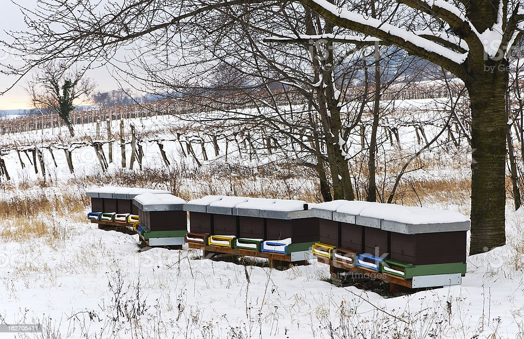 Hive and snow in winter royalty-free stock photo