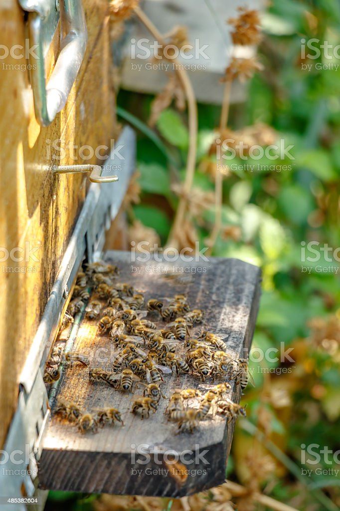 Hive in an apiary with bees on the landing board stock photo