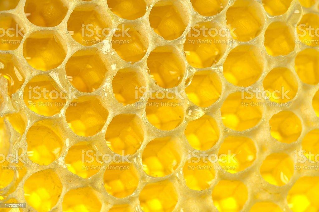 hive with honey stock photo