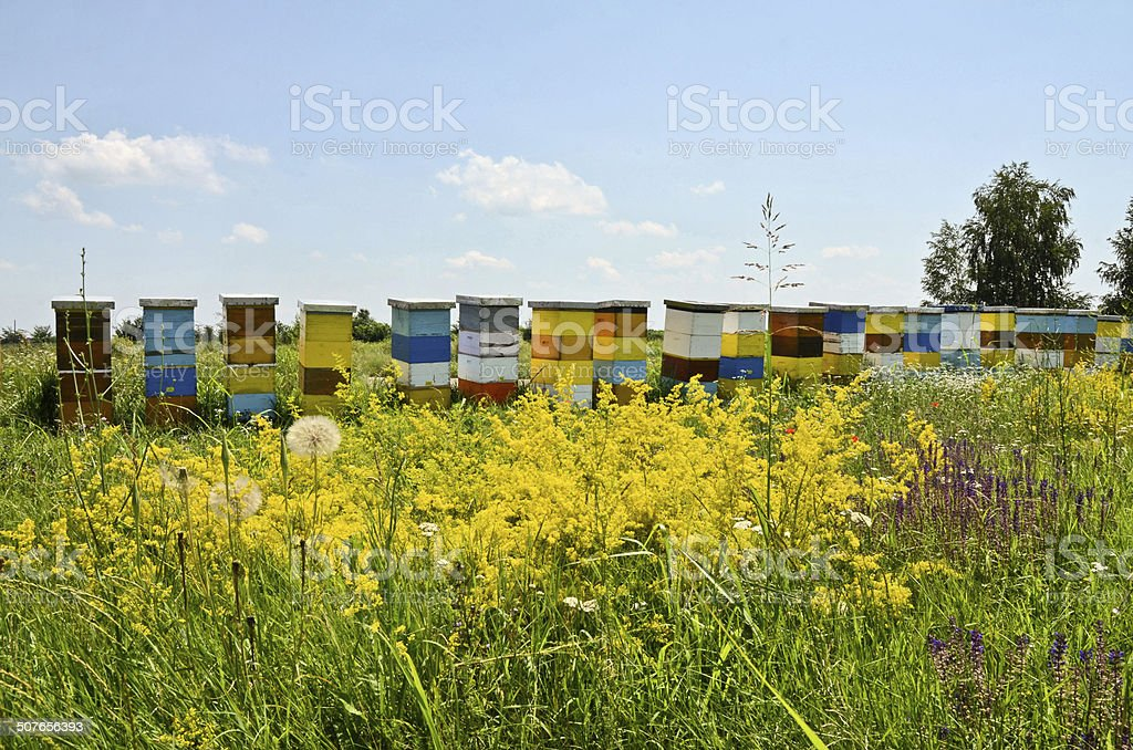 Hives in wildflower field stock photo