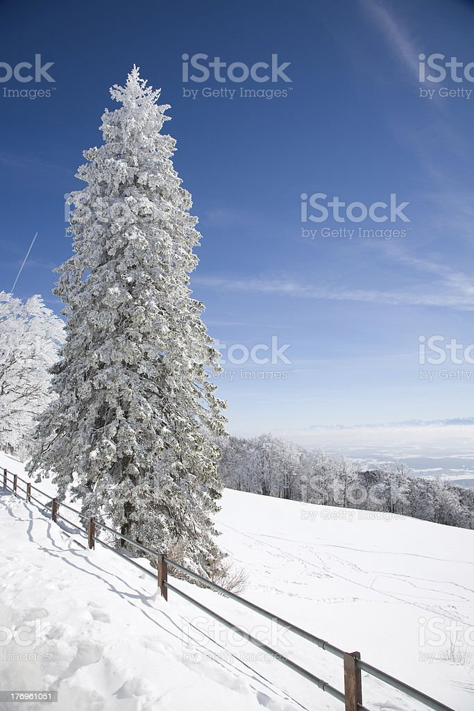 Hoar frost and snow stock photo