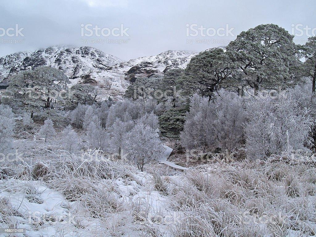 Hoar frost at Loch Shiel stock photo