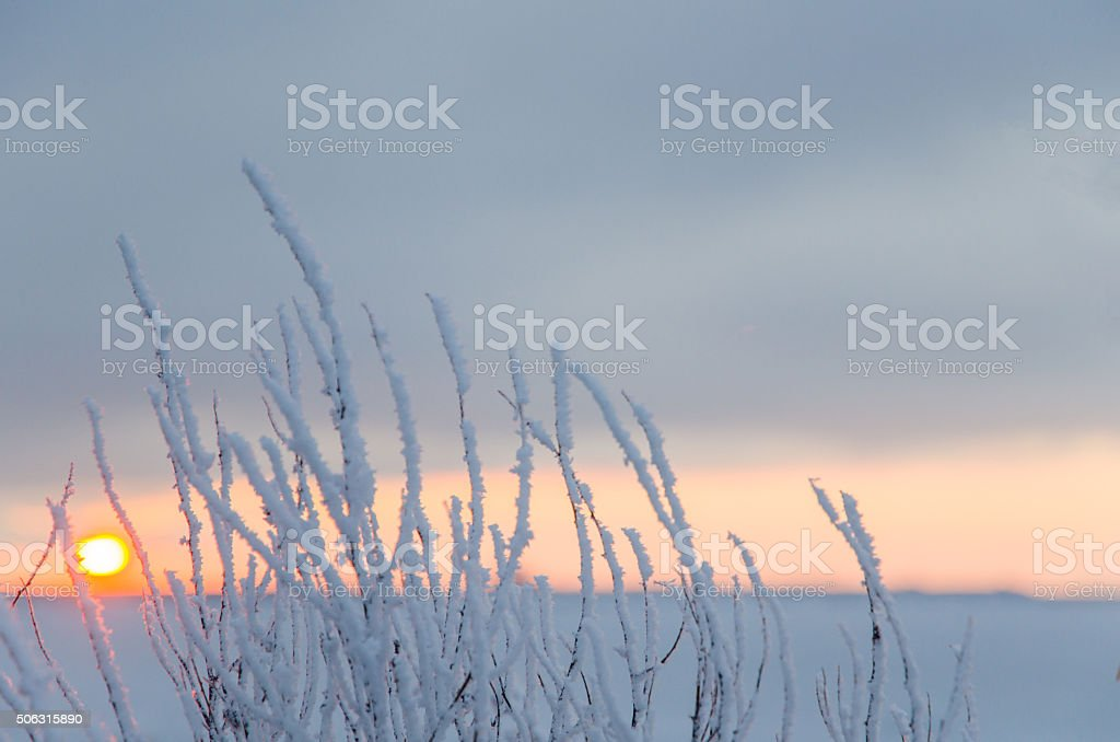 Hoar frost by the setting sun stock photo