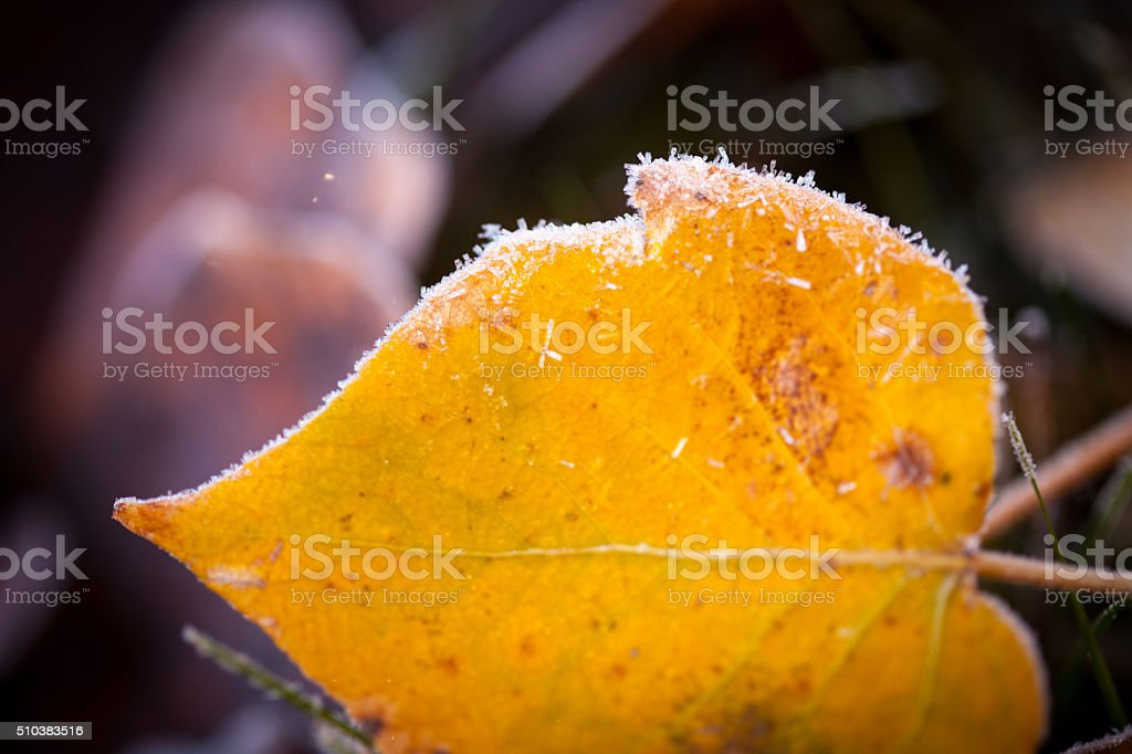 Hoar frost on a leaf in the fall. stock photo