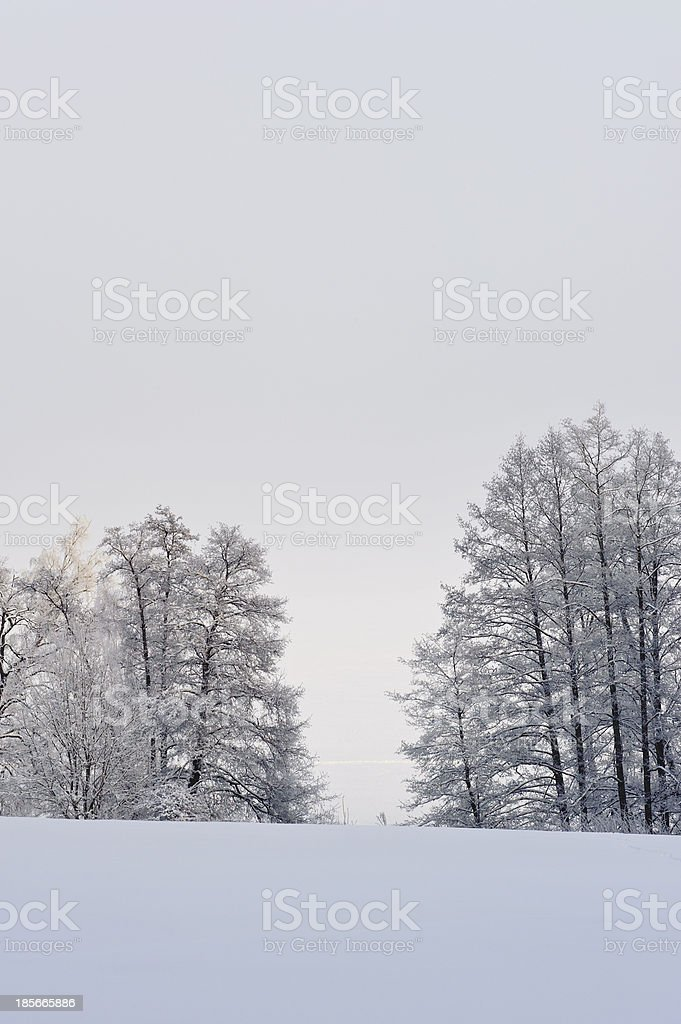 hoar frost on trees winter fog rising royalty-free stock photo