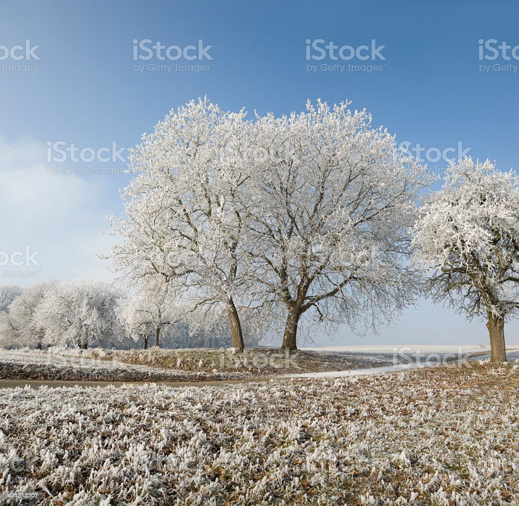Hoar frost  (image size XXL) royalty-free stock photo