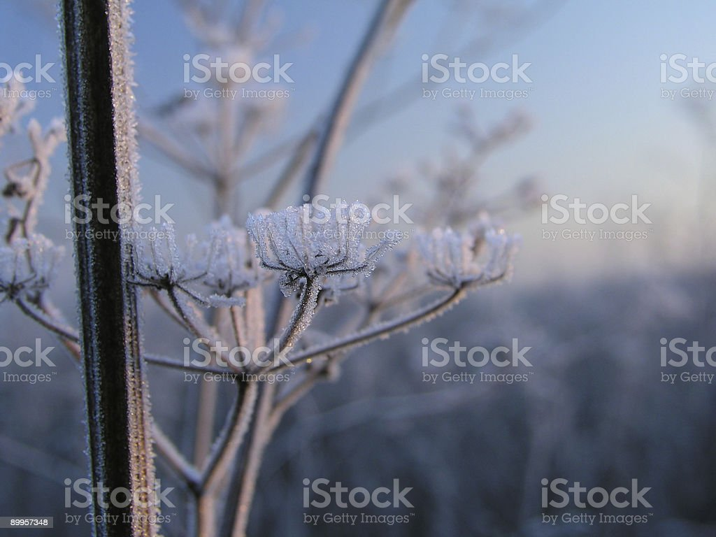 Hoar-frost 3 royalty-free stock photo