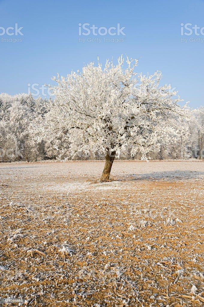 Hoarfrost day trees in november.