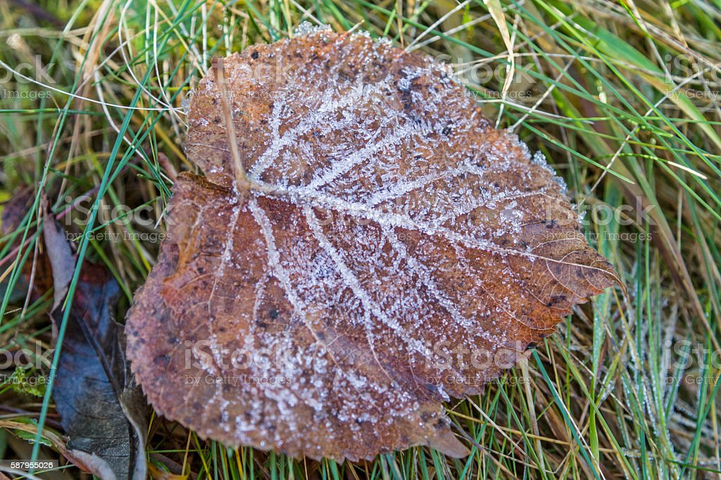Hoarfrost leaf in autumn stock photo