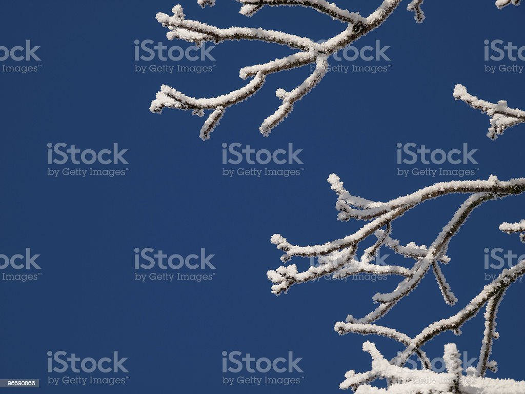 Hoarfrost on Branches royalty-free stock photo