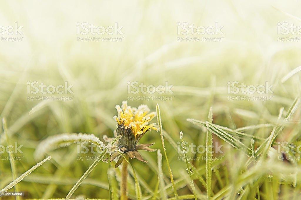 Hoarfrost on green grass stock photo
