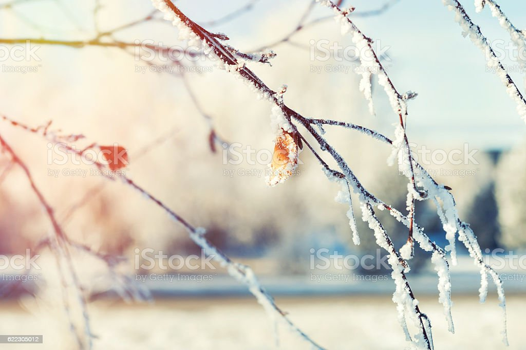 Hoarfrost on the trees in winter forest stock photo