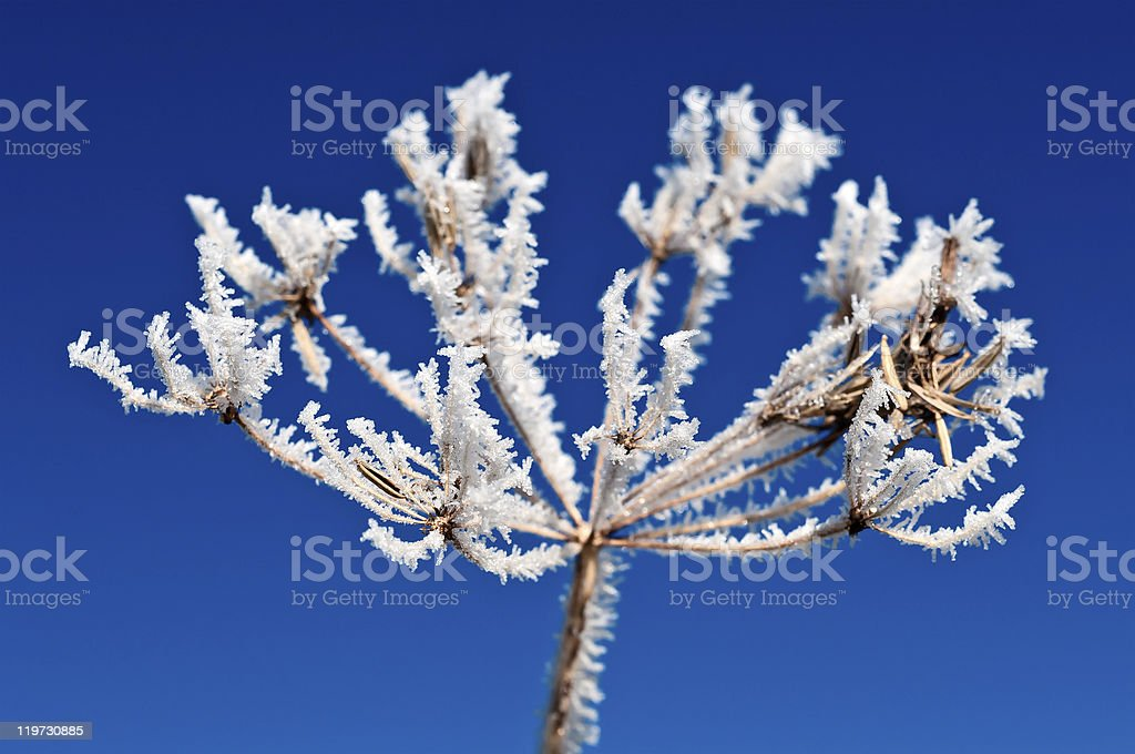 hoarfrost royalty-free stock photo
