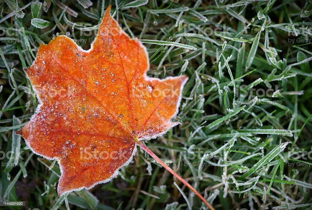 Hoar-frost royalty-free stock photo