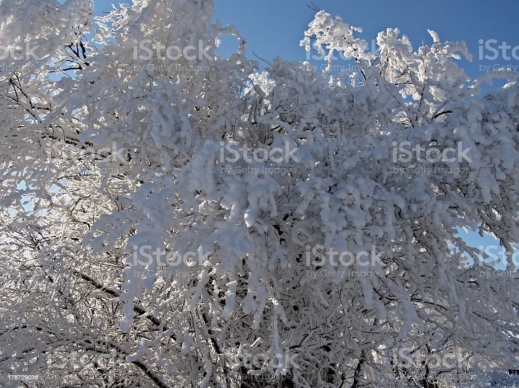 Hoarfrost. royalty-free stock photo