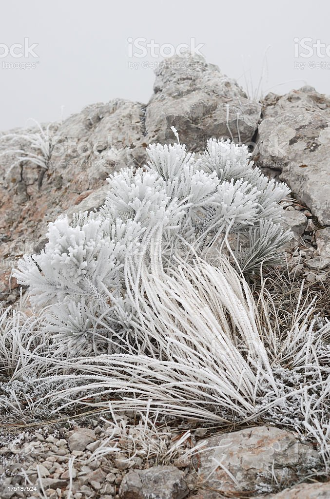 Hoarfrosted grass in fog at the edge of a rock stock photo