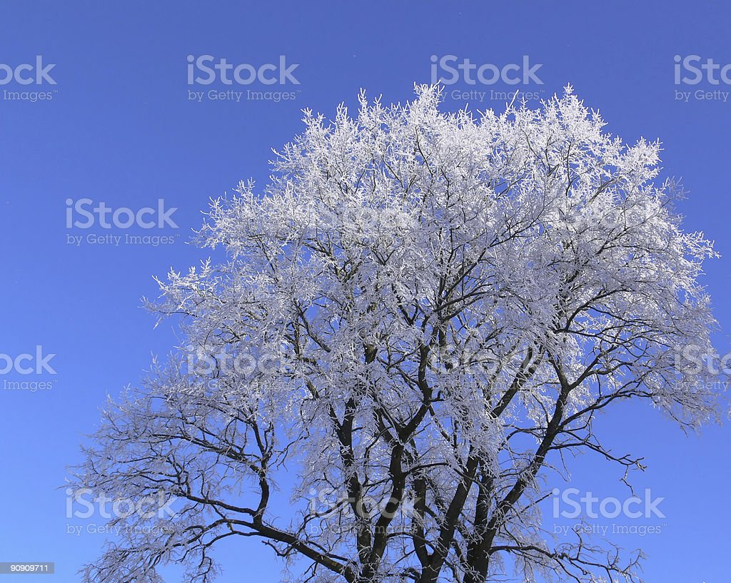 Hoar-frosted tree stock photo