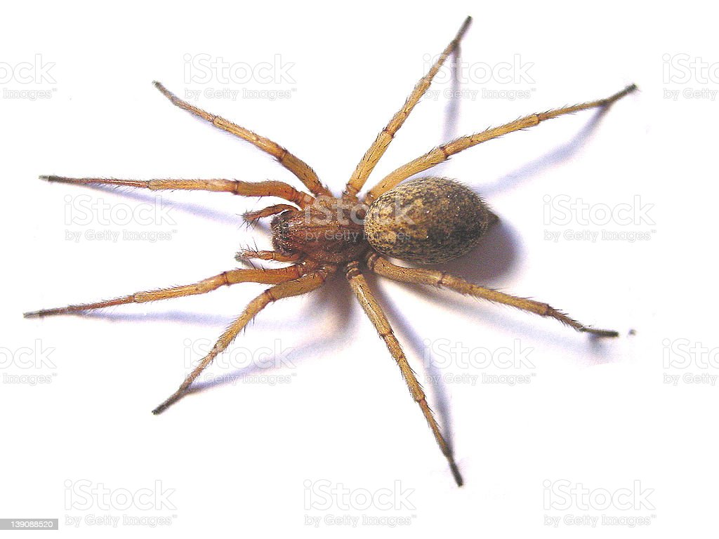 Hobo Spider Landscape royalty-free stock photo